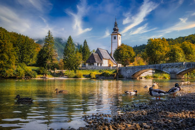 Ducks swimming in lake Bohinj